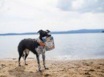 Vyhrajte chutné pamlsky pro psy Carnilove Fresh