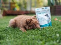 Soutěž o kloubní výživu Geloren dog